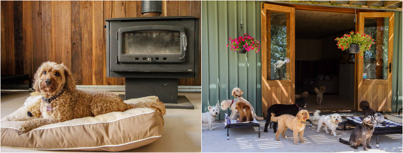 dog boarding | DOGUE Country Retreat