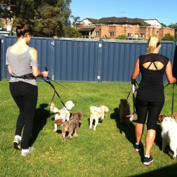 DOGUE GYMEA TEAM