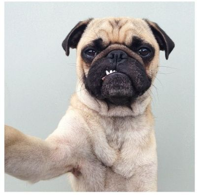 How to teach your dog to take a selfie