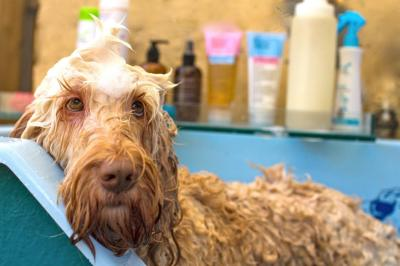 DOGUE ZETLAND | DOG GROOMING