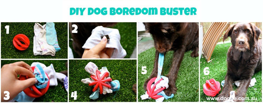 DIY-dog-boredom-busters
