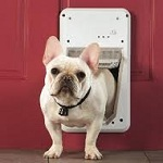 Training tips to master the doggy door