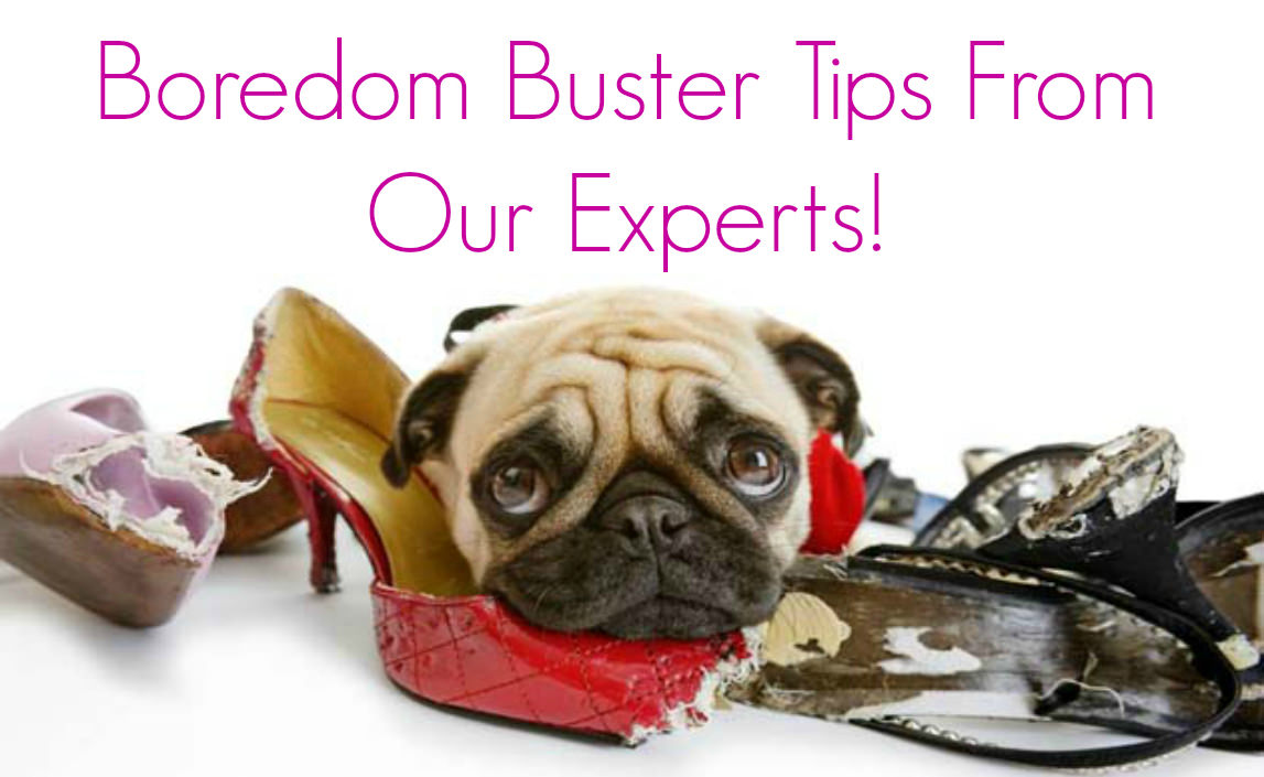 boredom-buster-tips-from-our-expert-4_mini