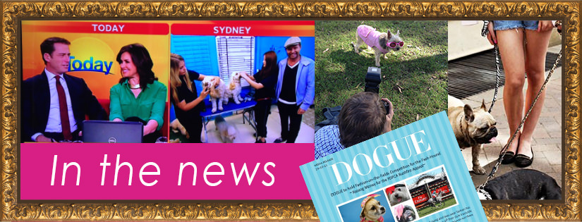 Website - Club Dogue banner image-MEDIA_mini