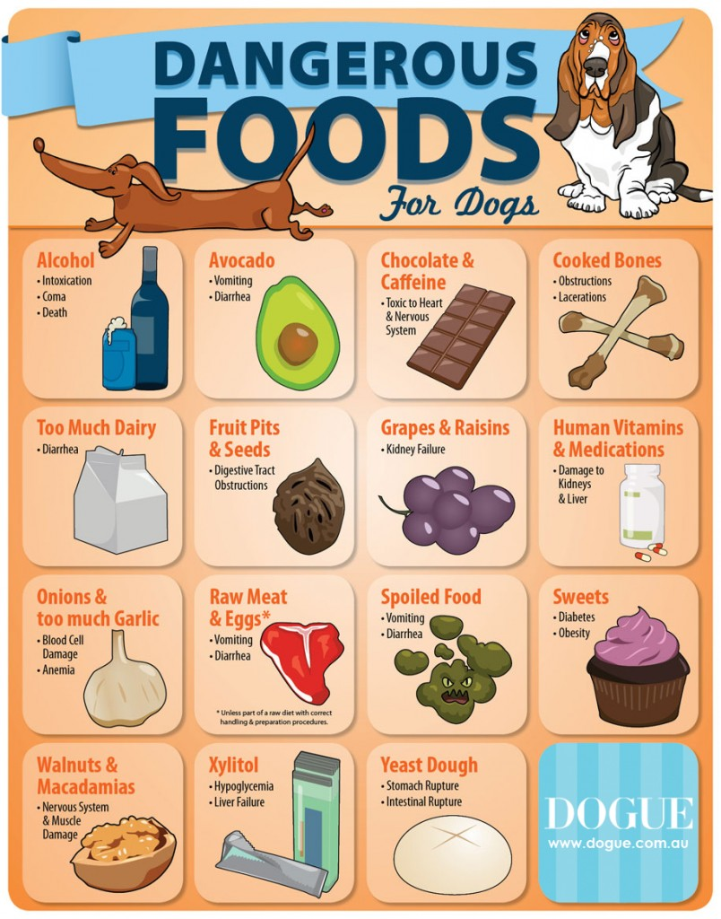 Dangerous Foods For Dogs Dog Blog Dogue