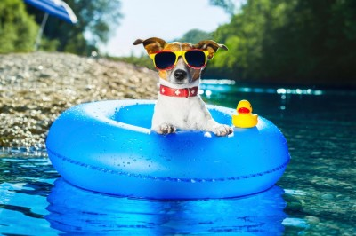 Dog products for summer