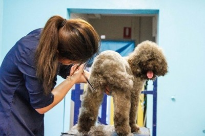 Dog grooming in balmain