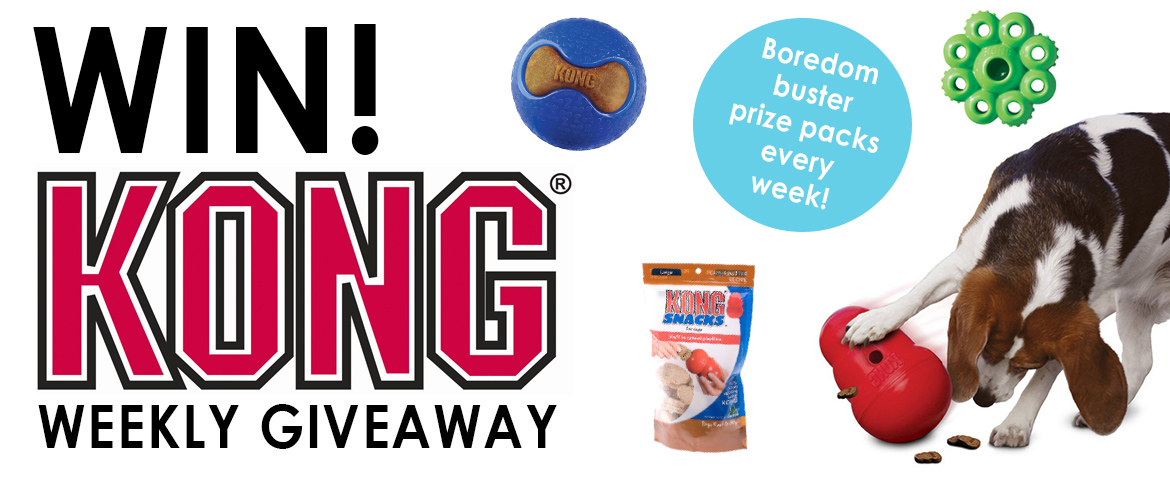 kong giveaway_simple_banner photo