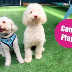 wahroonga dog day care