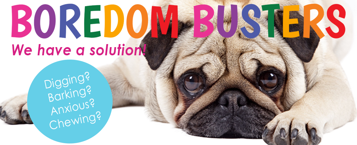 homepage banner boredom busters