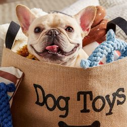dog_toys_staged_website