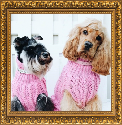 DOGUE dog jumpers lookbook dogue