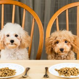 Real Pet Food Diet