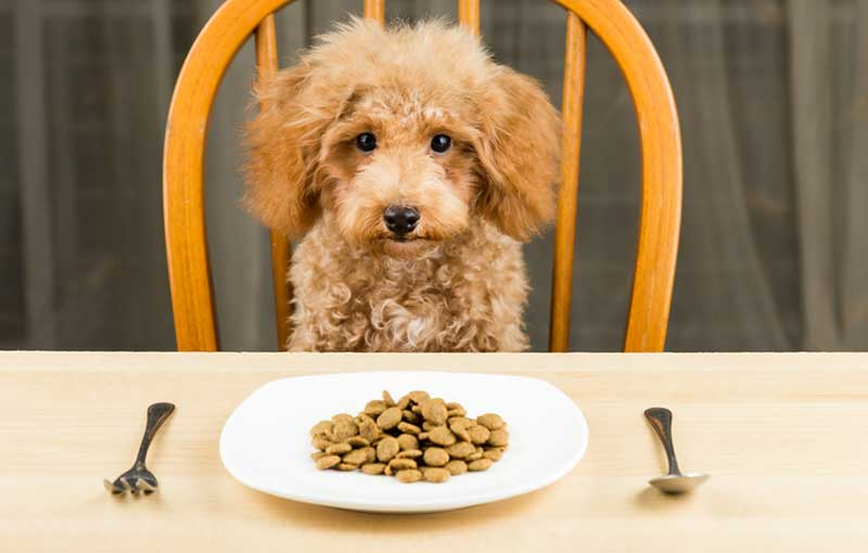 Real Pet Food Kitchen History of canine nutrition