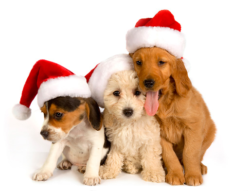 DOGUE Christmas Dog Party