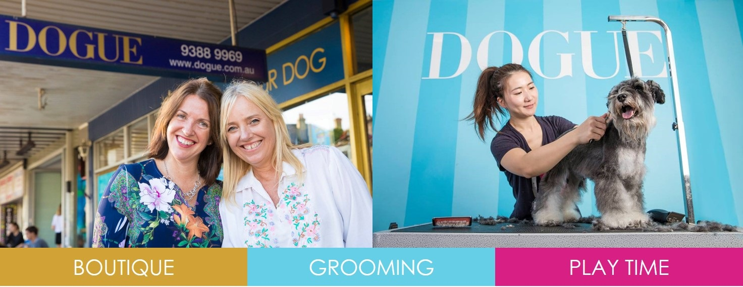 dogue franchise dog boutique and spa