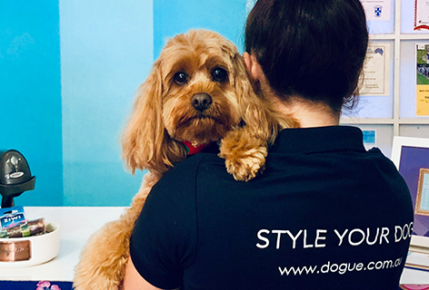 dogue franchising | pet franchise
